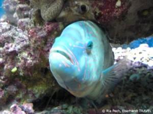 Fisch im Aquarium von Aqaba