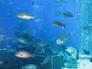 Aquarium im Atlantis Hotel