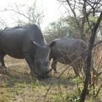Great Zimbabwe und Matobo National Park – Safari und Reise in Simbabwe / Zimbabwe
