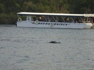Zambezi Fluss
