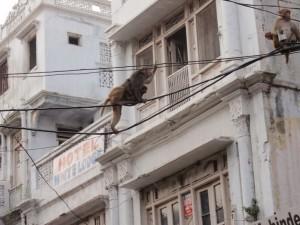 kletternde Nachbarn