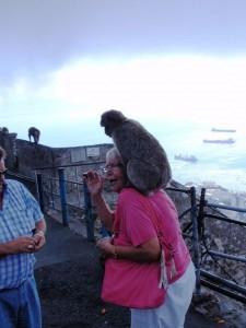 Gibraltaraffe
