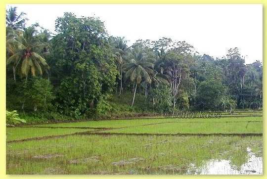 Urlaubsbericht: Sri Lanka Reise Live dabei und mitten drin