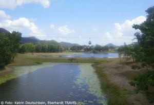 In 4er-Gondeln schwebten wir über dem Regenwald hinauf nach Kuranda