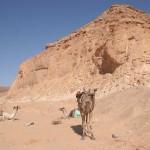 Karawanenreise Sinai - 10 Tage in der Wüste