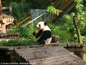 Pandabär im Sieben-Sterne-Park in Guilin