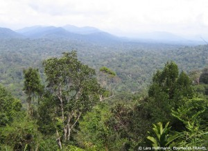 Blick über den Taman Negara Regenwald