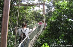 Wanderung durch die Baumkronen im Taman Negara Nationalpark