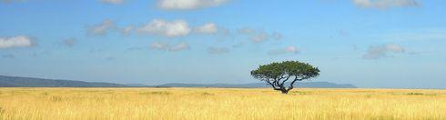 Tansania-Serengeti
