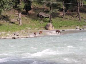 Flussbett auf dem Rückweg nach Srinagar