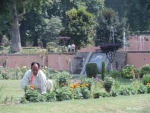 Gärtner in Srinagar