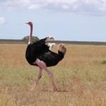 Tansania Rundreise mit Arusha Ngorongoro, Serengeti, Lake Manyara und dem Tarangire Nationalpark