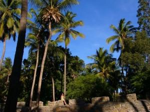 Kap Verde: Auf der Insel Santiago. Wandern unter Palmen