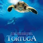Filmtipp: Tortuga - Die unglaubliche Reise der Meeresschildkröte