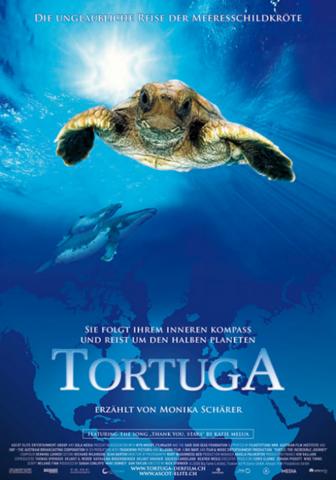 Tortuga Meeresschildkröte
