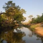 In Simbabwe unterwegs: Eindrücke nach dem ersten Regen - Zarte Pflänzchen