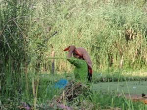 junge Inderin auf dem Dal See