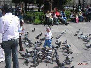 Taubenfüttern vor der Kathedrale