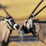 Rundreise Namibia – Windhoek, Sossusvlei, Swakopmund, Nationalparks, Victoria Fälle