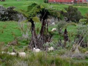 Quer durch die Schafweide