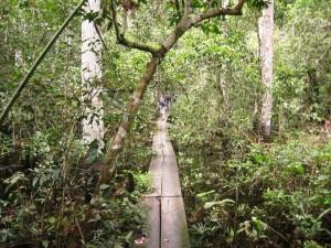 Holzsteg über dem Sumpf