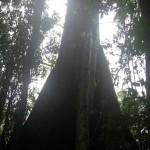 Peru Erlebnisse - der Regenwald bei Puerto Maldonado