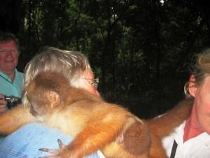 zutraulicher Affe