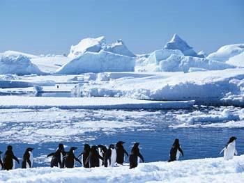 Adeliepinguine auf dem Weg zur Kolonie © Oceanwide Expeditions
