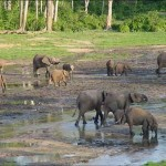 Das Kongo-Becken: Eine Reise in das grüne Herz Afrikas