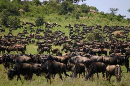 Die größte Tierwanderung Afrikas © A. Gutierrez