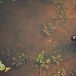 Das Pantanal: Eine Reise in die Savanne Südamerikas