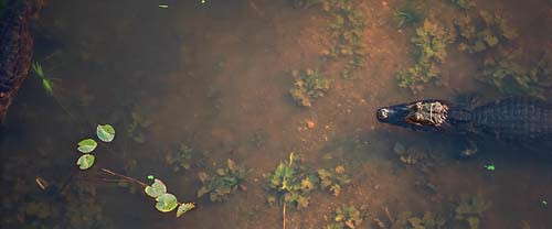 Das Pantanal: Ein Märchen aus Wasser © Ariel Diaco