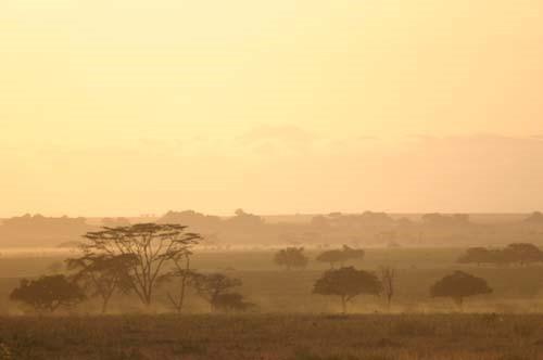 Serengeti-Landschaft im Morgengrauen © A. Gutierrez