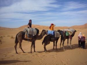 Das Kamel-Trekking durch die Sahara kann beginnen