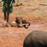 Frauenreisen – Frauenurlaub in Ostafrika