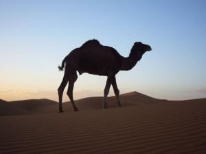 Herrlich - die Weite der Wüste