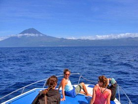 Whale Watching vor Pico