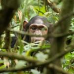 Uganda: Eine Reise in die Perle mit der dunklen Vergangenheit