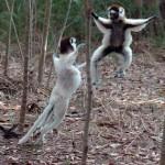 Madagaskar: Auf Reisen in der Arche Noah des indischen Ozeans