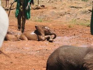 Mit Frauen allein reisen und Elefantenkinder sehen