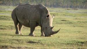 Frauenreisen - Nashorn Beobachtung