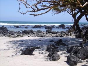 Galapagos-Meeresleguan-Isabela