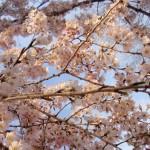 Reiseerlebnisse - unsere Ankunft in der Kaiserstadt Kyoto