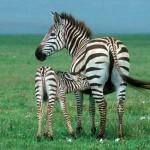 Mein Abenteuer Afrika – eine individuelle Safari-Reise zu Kenias Höhepunkten