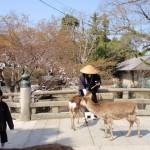 Japan Ferienreise - ein Tagesausflug nach Nara und zum Inari Schrein