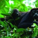 Costa Rica Gruppen Rundreise durch Mittelamerika