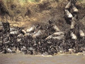 Große Migration