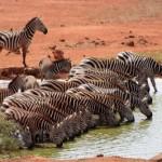 Tansania: Safari in der Serengeti und Ngorongoro Krater und Badeurlaub auf der Gewürzinsel Sansibar