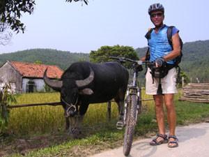 Begegnung mit einem Wasserbüffel Halong Bucht Vietnam