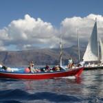 Whale Watching - wunderbare Delfin- und Wal-Begegnungen vor La Gomera